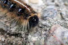 P6070010B (The Real Maverick) Tags: highpark torontoparks toronto canada ontario outdoor olympus caterpillar