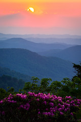 Roan Mountain Sunset (skiserge1) Tags: park flowers blue sunset mountain mountains nature landscape outdoors nc spring highlands tn state hiking tennessee north bald scenic ridge trail backpacking rhododendron backpack carolina bloom azalea blooms appalachian wilderness roan appalachians