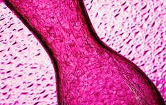 Pink Abstract (Karen_Chappell) Tags: pink stilllife abstract glass pattern pastel textures vase