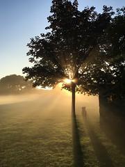 Dog in the fog (raindog) Tags: park morning summer dog mist tree sunrise iphone iphonese
