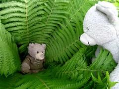 seeking the fern flower at midsummernight (veebruar) Tags: fern bears tradition myth juhannus summersolstice midsummernight ji jonins jaani