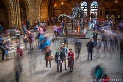 In the Midst (James Neeley) Tags: longexposure london timeexposure naturalhistorymuseum nhm jamesneeley