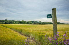 Walk this way (Stickyemu) Tags: sky flower green lines clouds landscape countryside purple fields signpost footpath ricohgr