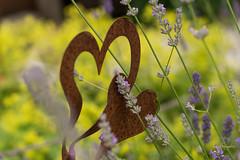 Garden Moments4 (Wilhelm v. Kallmnz) Tags: natur garten herz shabby lavendel