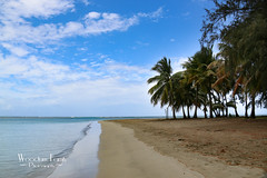 Luquillo beach (Photos By Bill in WV) Tags: ocean life blue trees sea cloud sun white hot reflection green beach nature water beautiful beauty leaves clouds palms sand marine scenery day salt tan pals palm beaches waters caribbean noon seas svi breez