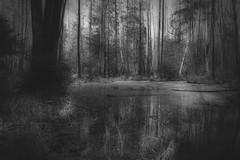 *** (pszcz9) Tags: las blackandwhite bw tree nature water monochrome forest landscape nationalpark spring sony poland polska swamp bagno woda a77 wiosna przyroda drzewo beautifulearth pejza parknarodowy