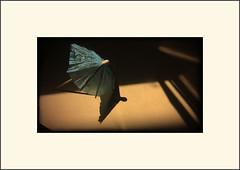 Still life of cocktail parasol (Bob R.L. Evans) Tags: shadow umbrella highcontrast parasol minimalism