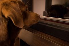 Oh no! Dad! a dog on TV! (federicojakimowicz) Tags: ex pentax sigma 1020mm dg f35 k3ii sigma1020mmf35exdg