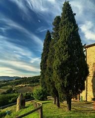 iphonepic 4 - Cypresses (ganagafoto) Tags: trees sunset italy alberi landscapes europa europe italia tramonto outdoor tuscany toscana paesaggi cypresses cipressi ganagafoto