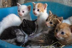 5 CATS (Luigi Rossini) Tags: cats baby animal gattini piccoli teneri