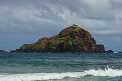 Alau Island (Shauna Norrbom) Tags: island birds hawaii maui hana