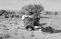 RAD20160610_033 - Munga Thirri Expedition, Simpson Desert AUS (Kodak BW400CN) (Cecilia Temperli) Tags: rad20160610 arollinadayadayinaroll australia camelexpedition camels trekking desert packcamels film kodak kodakbw400cn nikon nikonfm3a simpsondesert mungathirrisurveyexpedition swag australiandesertexpeditions