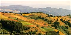 On Sumadija slopes (Katarina 2353) Tags: panorama film landscape nikon europe serbia srbija umadija katarinastefanovic katarina2353