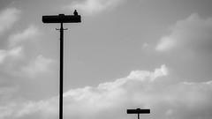 gute Aussicht da oben (FotoTrenz NRW) Tags: sky bird monochrome silhouette clouds himmel wolken grau sw minimalism viewpoint weite oben vogel perspektive aussichtspunkt