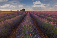 Morning sunrise in the lavender fields near Valensole (Jackie Tran Anh) Tags: flowers sunset red sun house france tree field clouds sunrise landscape lights europe lavender rows provence moning lavende lavenderfields valensole
