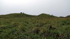 Local vegetation (DiSorDerINaMirrOR) Tags: hills landscape nature cows helgoland germany sea north northsea summer island green