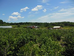 Tour the Farm (Emery Farm) Tags: family flowers summer fall spring corn farm pumpkins strawberries fields produce blueberries emery emeryfarm