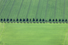 Neatly Lined (Aerial Photography) Tags: trees tree verde green field by landscape cornfield landwirtschaft feld row aerial line grn agriculture bume baum deu grub luftbild alignment leaftree poing luftaufnahme ebe obb lineoftrees bayernbavaria deutschlandgermany reihe getreidefeld laubbaum deciduoustree ackerbau baumreihe rowoftrees foliagetree fotoklausleidorfwwwleidorfde poinglkrebersberg 08052012 1ds78510