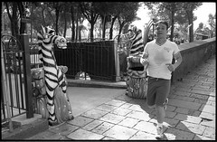 (Zebras!) (Robbie McIntosh Photography) Tags: leica blackandwhite bw man film monochrome analog 35mm eyecontact kodak candid trix streetphotography rangefinder running stranger bn summicron negative sweat kodaktrix analogue jogging fitness m6 biancoenero argentique physical zebras leicam6 dyi selfdeveloped trix400 pellicola analogico leicam6ttl microphen leicam filmisnotdead autaut microphenstock microphen10 leicasummicron35mmf20iv leicasummicron35mmf2iv summicron35mmf20iv