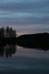 Evening reflection (liisatuulia) Tags: reflection finland swan heijastus punkalaidun