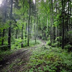 Green Forest II (M a r c O t t o l i n i) Tags: monttendre trees arbres vertical zeiss green vert vuescan vaud v700 switzerland suisse square nature mf marcottolini kodak hasselblad500cm film epsonv700 epsonperfectionv700 epson 160 portra160 color couleur carré 6x6 planar planar2880mm 6x6only