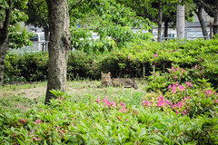 Today's Cat@2013-05-19 (masatsu) Tags: cat canon catspotting thebiggestgroupwithonlycats powershots95