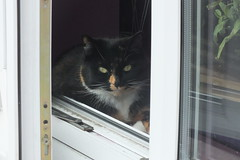 Misty (Moldovia) Tags: pet animal misty cat feline pointandshoot catalog pointshoot catpix catspotting catmoments catnipaddicts catsunleashed fujifilmfinepixhs20exr