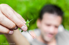 Grasshopper is Back ! (D@dou) Tags: grasshopper animalplanet sauterell