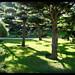 Japanischer Garten_1