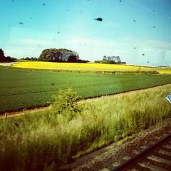 ทุ่ง rapeseed ข้างทาง (ใช่ป่าวหว่า) ปล. รถไฟอังกฤษครับ ล้างกระจกบ้างนะครับ ค่ารถก็ตั้งแพง