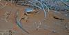 DSC01009 (Instagram x3abr twitter x3abrr) Tags: نار سيارة حيوانات السعودية حطب نيسان صحراء رمل شجر عدسة قرية ثعبان باترول سوني جيب القصيم سحلية كامرة زوم ثعابين الرربيعية alrrabieihpuebloqassim arabiasauditaserpienteárbolesdemaderadefuegodelaarenapatrullajeepnissankamrhsonyalpha57animalesserpienteszoomlagartolentedesierto