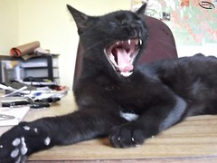 DSCF0228 (Andressapc) Tags: preto gato patas preguia bocejo