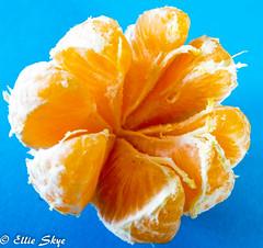 Divided Orange (Ellie Skye) Tags: blue food orange macro fruit bright eat segment citrus divided macromonday