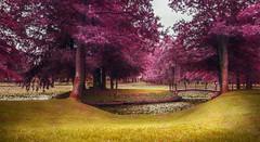 Purple dream (TinaP358) Tags: park bridge trees light lake green forest vintage colorful purple bright awesome surreal best slovenia dreamy colourful brdo exellent