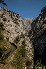 "Ruta de ""El Cares""_15 (Dinacast) Tags: naturaleza rio ruta ro de arbol canal agua cares paisaje el montaa roca piedra rutadelcares montaa"