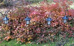 gniazdowo. october 2013 (20) (kexi) Tags: autumn red wallpaper fall leaves four solar october 4 poland polska lamps instantfave 2013 gniazdowo