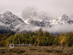 Grand Teton NP on a Stormy Day (46a) (moelynphotos) Tags: autumn trees mountains clouds landscape nationalpark scenery nationalparks snowymountains grandtetonnationalpark mountainlandscape mountainpeaks stormyday earlysnow snowypeaks moelynphotos grandtetonsinthefall