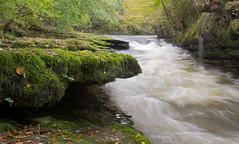 Moss Side (Gamblin Man) Tags: longexposure autumn trees leaves river kent moss nikon rocks unitedkingdom lakedistrict rapids milnthorpe d3100