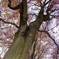 Boom met paddestoelen (Floortje Walraven) Tags: autumn tree mushroom forest leaf herfst boom blad leafs bos friesland paddestoel beetsterzwaag bladeren