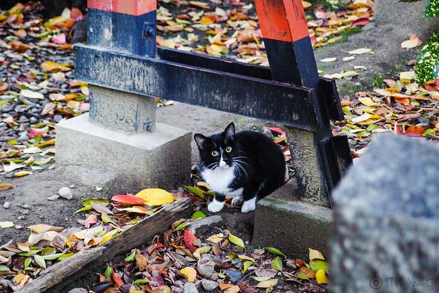 Today's Cat@2013-11-26