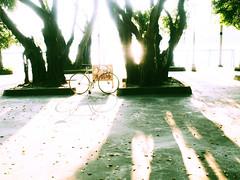 #nagasawa #light (funkyruru) Tags: light bike taiwan cycle fixie fixedgear taipei pista trackbike njs nagasawa olympusomdem5 mzuikodigital17mmf18