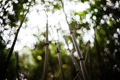 Bamboo. (Crusade.) Tags: hk nature bokeh sony voigtlander bamboo 40mm a7r vm40