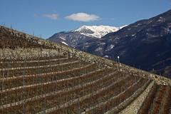 diagonale (bulbocode909) Tags: nature suisse hiver bleu nuages vignes valais montagnes vision:mountain=0862 vision:outdoor=099 vision:sky=0799 vision:clouds=0871