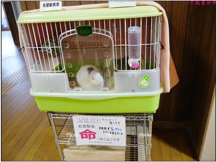 鳥取白兔神社 (36).JPG