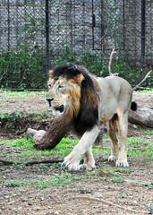 mysore zoo 15