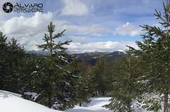 Natural window 2 (lvaro (Photographer & Graphic Designer)) Tags: naturaleza blanco ruta gris arboles natural nieve panoramic sierra cielo panoramica nubes montaa burgos hielo senda demanda lagunas neila