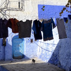 Kitty (halifaxlight) Tags: street door blue cat square kitten shadows sunny morocco medina washingline alleyways chefchaouene