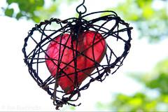 Love Endures (jan buchholtz) Tags: love rust heart encased cage age capture trap