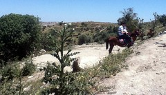 Father and son riding at Umm Qays, Jordan (LarrynJill) Tags: travel vacation horse middleeast jordan 2014 ummqays
