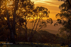 Sunset Bald Hill, Hill End with sig (loobyloo55) Tags: trees sunset yellow gold australia hillend